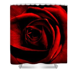 Rose Shower Curtain by CML Brown