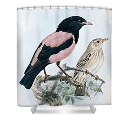 Rose Colored Starling Shower Curtain