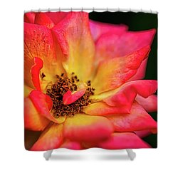 Rose Corolla Shower Curtain