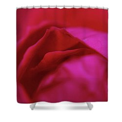 Rose Shower Curtain by Dennis Baswell