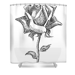 Rose Drawings Black-white 5 Shower Curtain