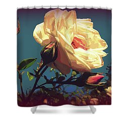 Rose Facing The Sun Shower Curtain