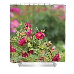 Shower Curtain featuring the photograph Rose Garden Promise by Kim Hojnacki