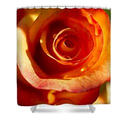 Shower Curtain featuring the photograph Rose Glow by Jeanette French