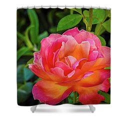 Rose In The Evening Shower Curtain