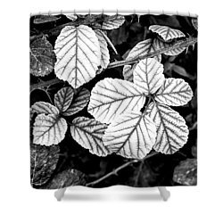 Rose Leaves Shower Curtain