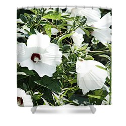 Rose Mallow Shower Curtain
