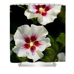 Shower Curtain featuring the photograph Rose Of Sharon by Christina Rollo
