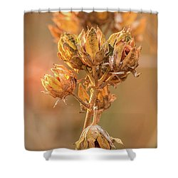 Rose Of Sharon In Winter Shower Curtain