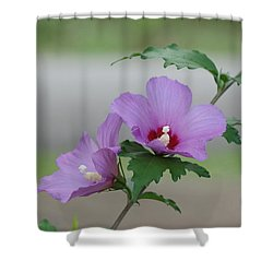 Rose Of Sharon Pair Shower Curtain by Rick Friedle