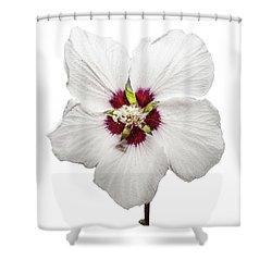 Rose Of Sharon Shower Curtain