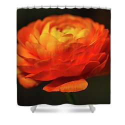 Rose Of Spring Shower Curtain