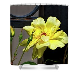 Rose On Wrought Iron Shower Curtain