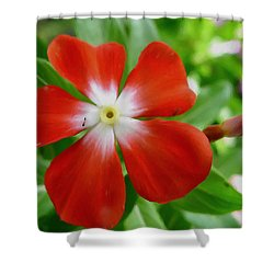 Rose Periwinkle Shower Curtain by Lanjee Chee