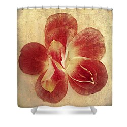 Shower Curtain featuring the photograph Rose Petals by Linda Sannuti