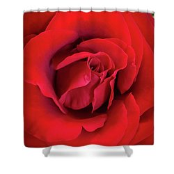 Rose Red 4 Shower Curtain