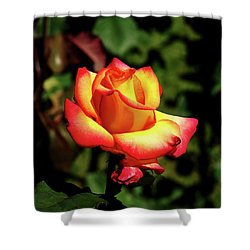 Rose To Remember Shower Curtain by Dale Stillman