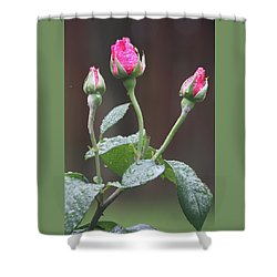 Shower Curtain featuring the photograph Rose Trio by Vadim Levin