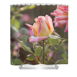 Rose Under Sunset Shower Curtain