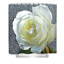 Shower Curtain featuring the photograph Rose With Some Sparkle by Terence Davis