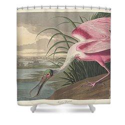 Roseate Spoonbill, 1836  Shower Curtain by John James Audubon