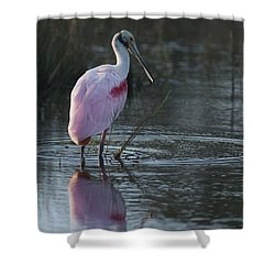 Roseate Spoonbill Shower Curtain