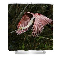 Roseate Spoonbill Flight Shower Curtain