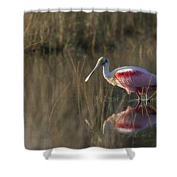 Roseate Spoonbill In Morning Light Shower Curtain