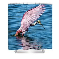 Roseate Spoonbill Landing Shower Curtain