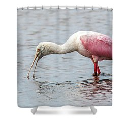 Shower Curtain featuring the photograph Roseate Spoonbill by Paul Freidlund