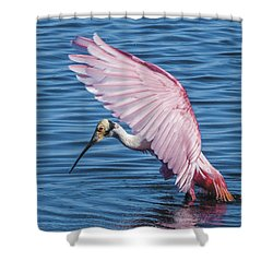 Roseate Spoonbill Profile With Wings Over Her Head Shower Curtain