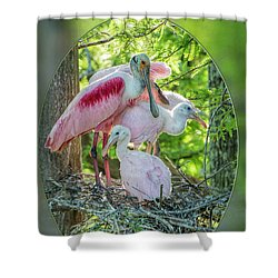 Roseate Spoonbills In Evangeline Parish Louisiana Shower Curtain
