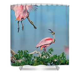 Roseate Spoonbills Shower Curtain