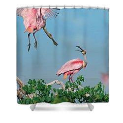 Roseate Spoonbills Shower Curtain by Tim Fitzharris