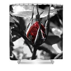 Rosebud Red Shower Curtain