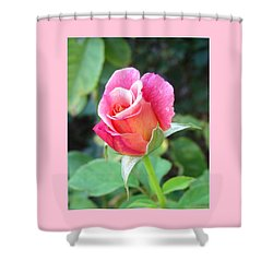 Rosebud With Border Shower Curtain by Mary Ellen Frazee