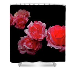Roses And Rain Shower Curtain