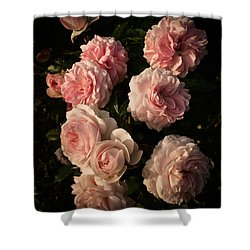 Roses Aug 2017 Shower Curtain