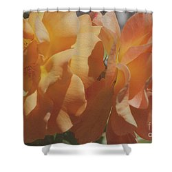 Shower Curtain featuring the photograph Roses by Cassandra Buckley