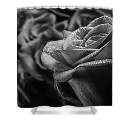 Roses In Black And White Shower Curtain