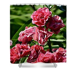 Shower Curtain featuring the photograph Roses  by Lyle Crump