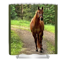 Rosey On The Road Shower Curtain
