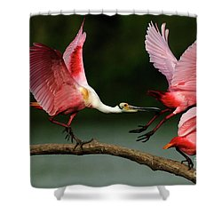 Rosiette Spoonbills Lord Of The Branch Shower Curtain by Bob Christopher