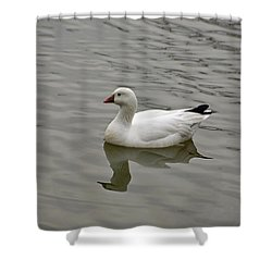 Shower Curtain featuring the photograph Ross's Goose by Sandy Keeton