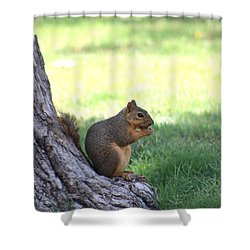 Roswell Squirrel Shower Curtain by Colleen Cornelius