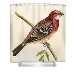 Rosy Bullfinch Shower Curtain