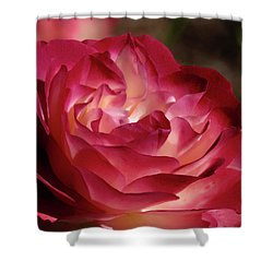 Rosy Closeup Shower Curtain
