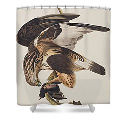 Rough Legged Falcon Shower Curtain by John James Audubon