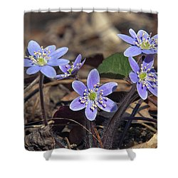 Round-lobed Hepatica Dspf116 Shower Curtain