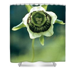 Roundleaf Asiabell Shower Curtain by American School
